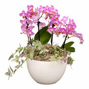 Debi Lilly Leadbetter Garden Orchid Arrangement