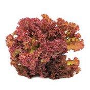 N/a Red Leaf Lettuce