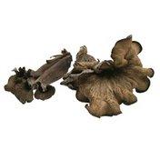 Black Trumpet Mushroom