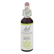 Bach Original Flower Remedies  Honeysuckle