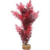 Imag Large Red Bush Plant
