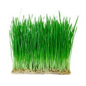 Wheatgrass Package