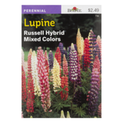 Burpee Lupine Russell Hybrid Mixed Colors