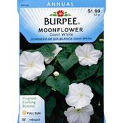 Burpee Moonflower, Giant White, 15 Foot Height
