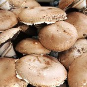 Portabello Mushroom Box