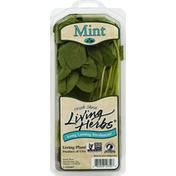 North Shore. Living Herbs Fresh Mint