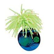 GloFish Tetra Yellow Sea Anemone Aquarium Ornament