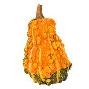 Organic Ornamental Gourd