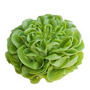 Butterhead (Boston, Butter, Bibb) Lettuce