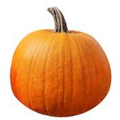 Organic Sugar Pie Pumpkin