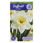 Garden State Bulb Company Daffodil