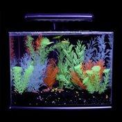 """GloFish 13"""" L X 7"""" W X 12"""" H Blue Tetra 3 Gallon Aquarium LED Kit"""