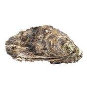 Fresh Standard Eastern Oysters