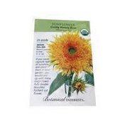 Botanical Interests Goldy Honey Bear Sunflower Seeds