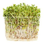 Clover Sprouts