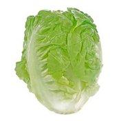 Organic Baby Romaine Lettuce