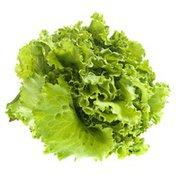 Organic Oakleaf Lettuce