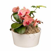 Westerlay Orchids Danielle Garden Orchid Arrangement