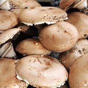 Loose Portabella Mushroom Cap