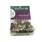 Myco Logical Morel Mushrooms