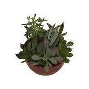 """5"""" Ceramic Garden Bright Succulent"""