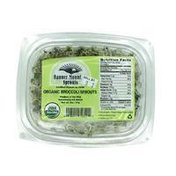 Banner Mountain Sprouts Organic Broccoli Sprouts