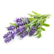 Debi Lilly Premium Lavender Collection