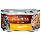 Purina Pro Plan Savor Adult Chicken & Barley Entree Mini Morsels in Gravy Dog Food