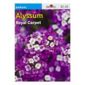 Burpee Alyssum Seeds