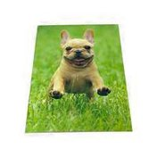 Avanti Frenchie Jumping in Grass Blank Matte Note Card