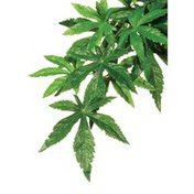 Exo Terra Abutilon Silk Terrarium Plant