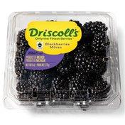 Driscoll's Fair Trade Blackberries