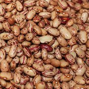 Rh Cranberry Beans