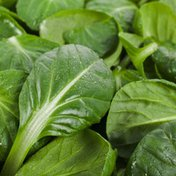 Tatsoi Spinach