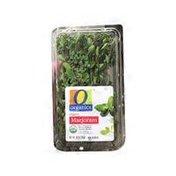O Organics Organic Marjoram