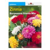 Burpee Zinnia ana Giants Mix