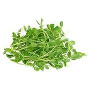 Organic Pea Sprouts