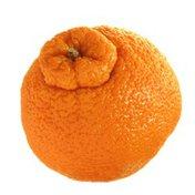 Organic Sumo Mandarin