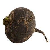 Organich Black Spanish Radish