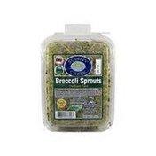 Sunny Creek Farm Broccoli Sprouts