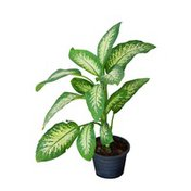 6 Special Potted Plant