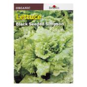 Burpee Seeds, Organic, Lettuce, Black Seeded Simpson