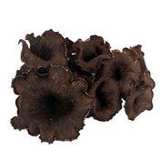 Organic Black Trumpet Mushroom