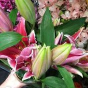 Lily Bunch