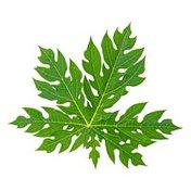 Organic Papaya Leaf