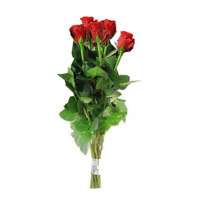 Debi Lilly Roses