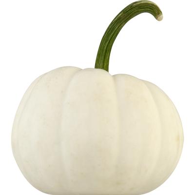 Bay Baby Produce Pumpkin, Casper