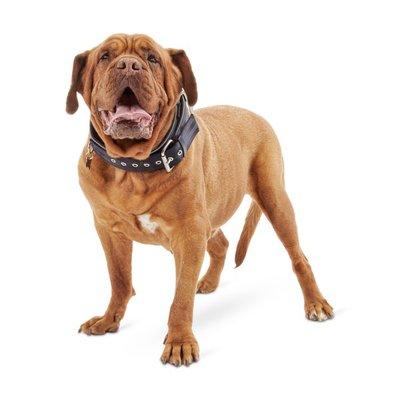 Good2 Go Extra Large to Extra Extra Large Black Big Dog Buckle Dog Collar