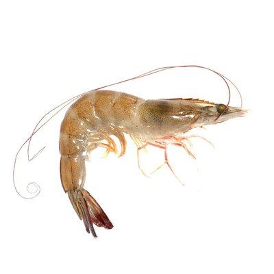 Raw Head-On Shrimp