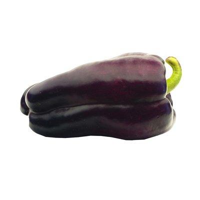 Organic Purple Bell Pepper